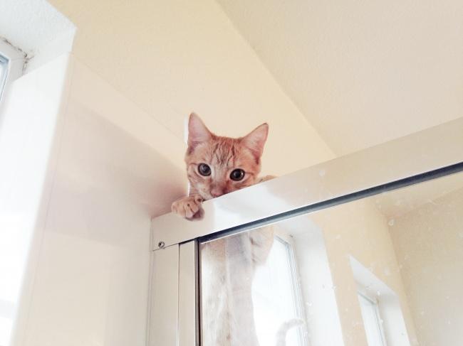 «Мой кот не поленился залезть наверх и подсмотреть»