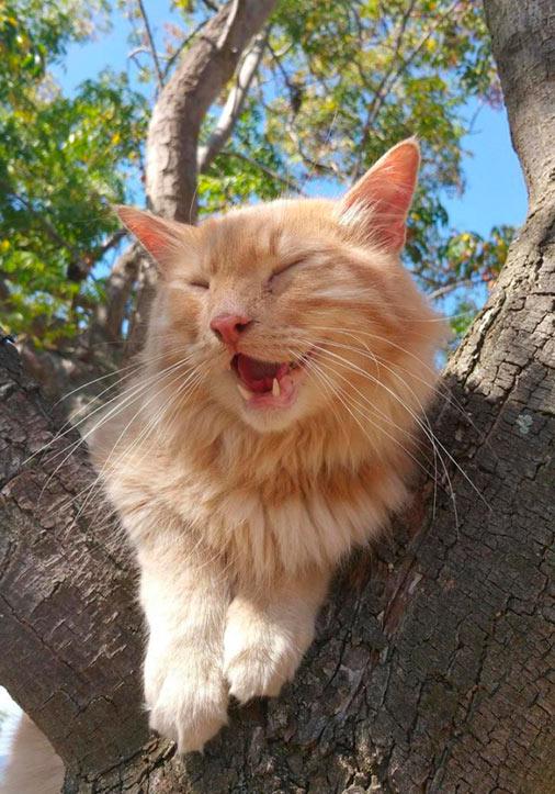 «Наш кот впервые залез на дерево»