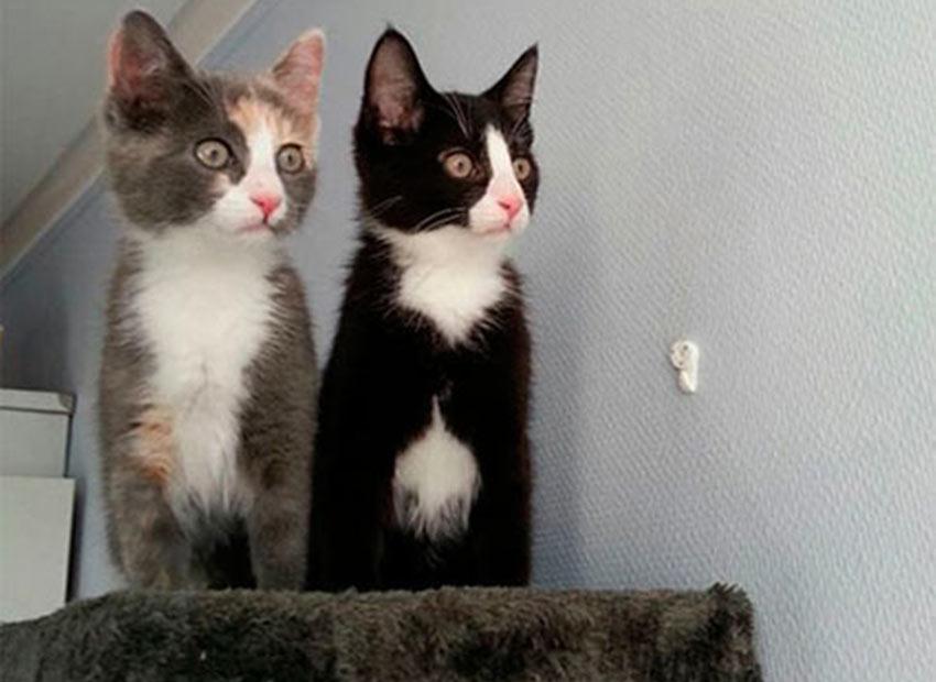 Кошки впервые увидели птичек в окошко