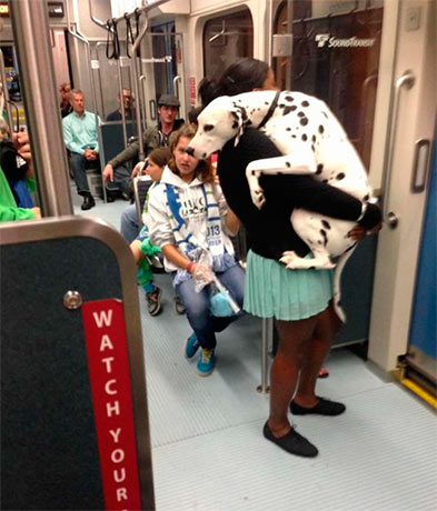 Пес первый раз в метро