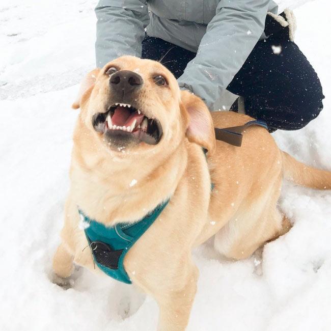 Пес, который впервые видит снег