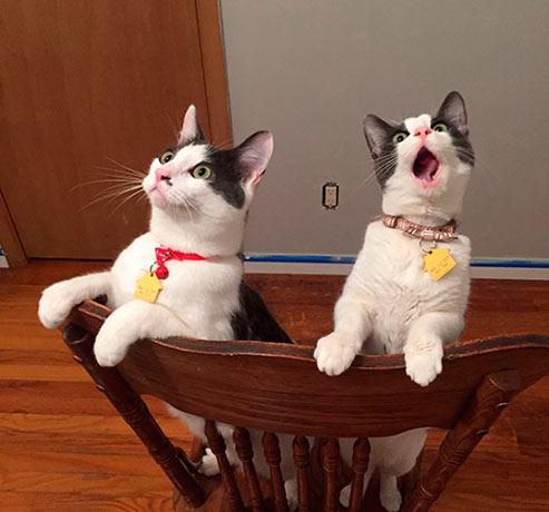Эти кошки впервые увидели крутящийся потолочный вентилятор