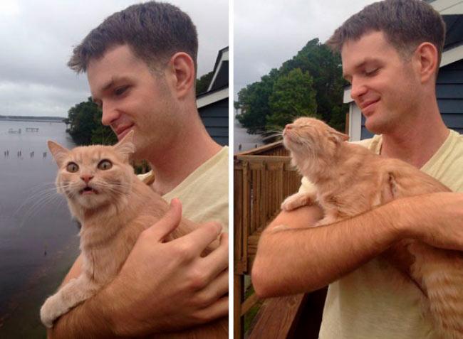 Кошку впервые вывели на улицу