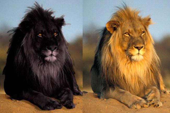17 животных, которых раскрасила сама ночь