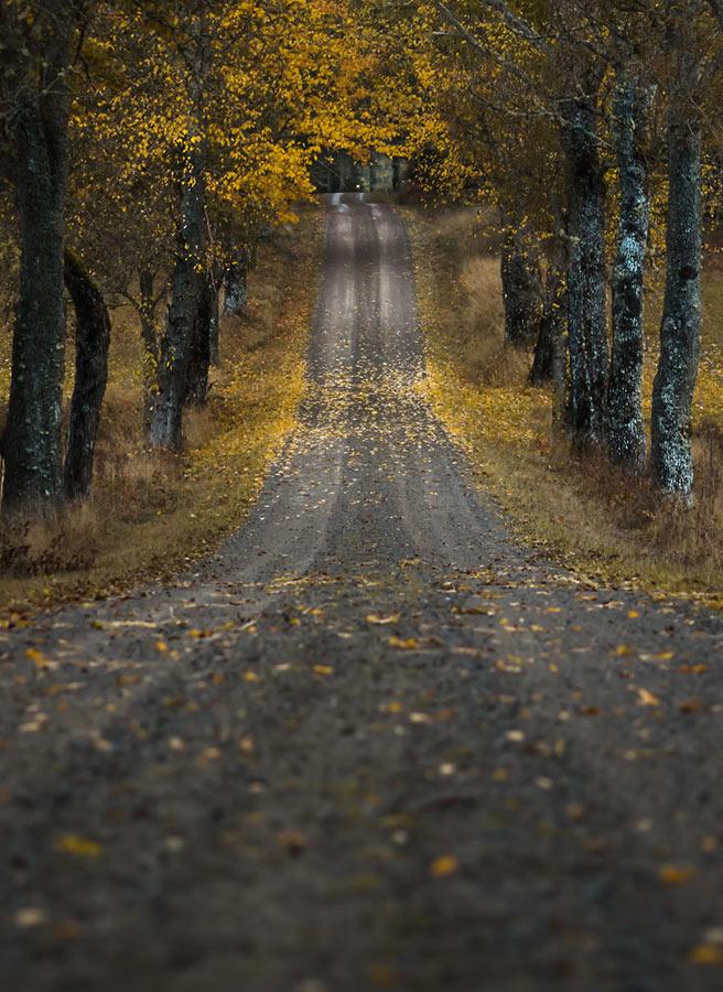 Суровая красота шведской природы