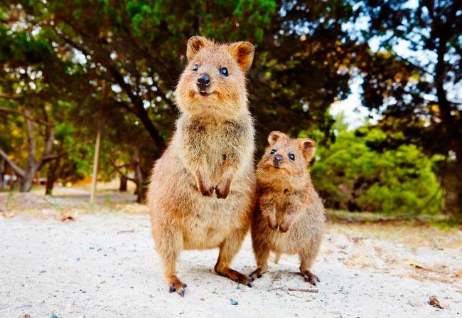 любить Австралию Australia