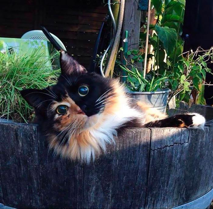 Самые красивые кошки в мире красавица жасмин beautiful cats
