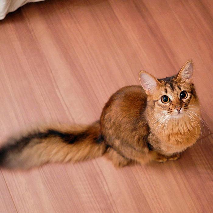 Самые красивые кошки в мире кошка люсина прикидывается белкой beautiful cats