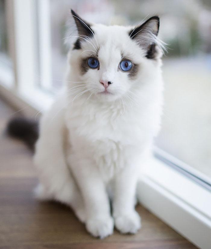 Самые красивые кошки в мире кот с глазами цвета океана beautiful cats
