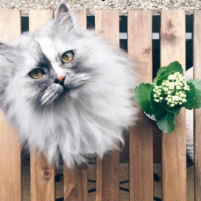 Самые красивые кошки в мире алиса персидская кошка с мраморным мехом beautiful cats