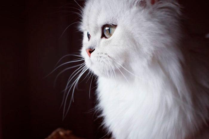 Самые красивые кошки в мире белла beautiful cats