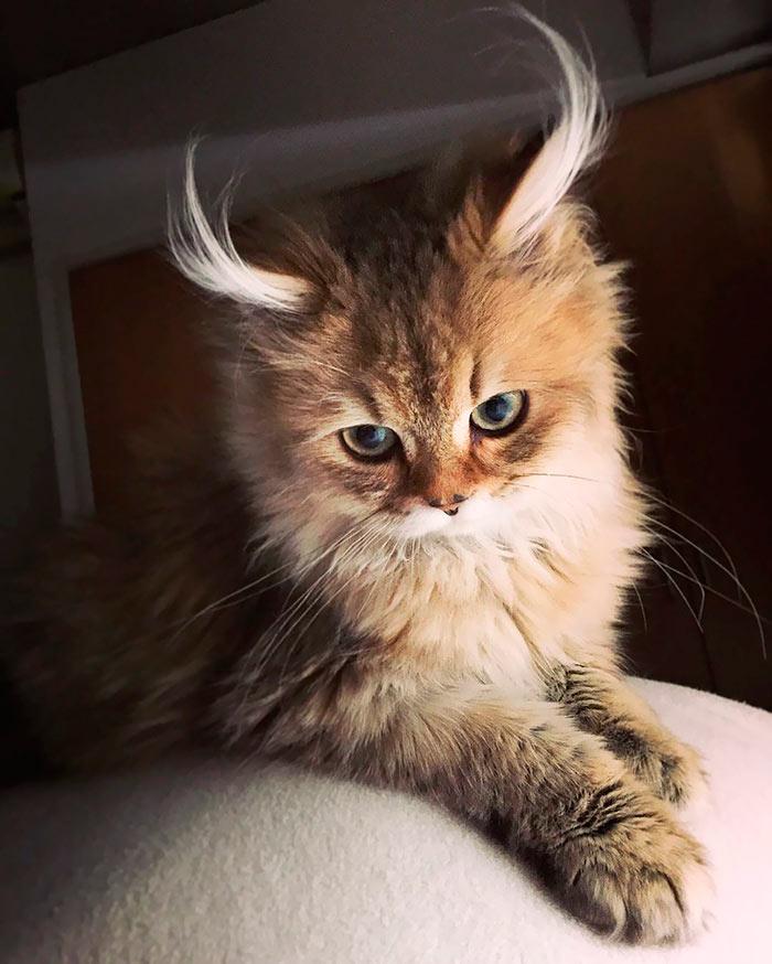 Самые красивые кошки в мире кот-антилопа beautiful cats
