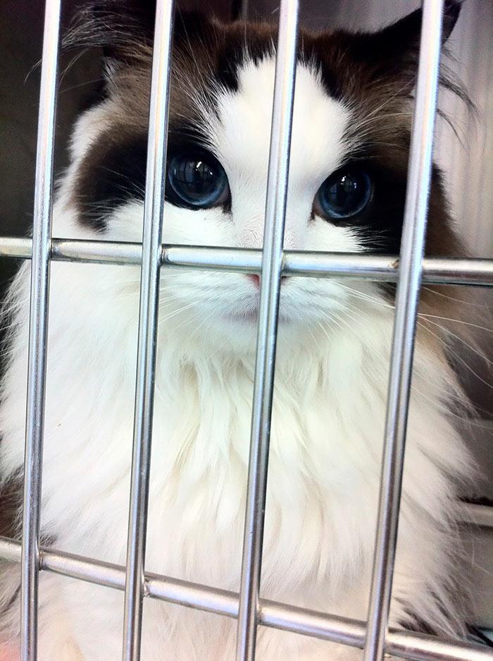 Самые красивые кошки в мире мимишный рэгдолл beautiful cats