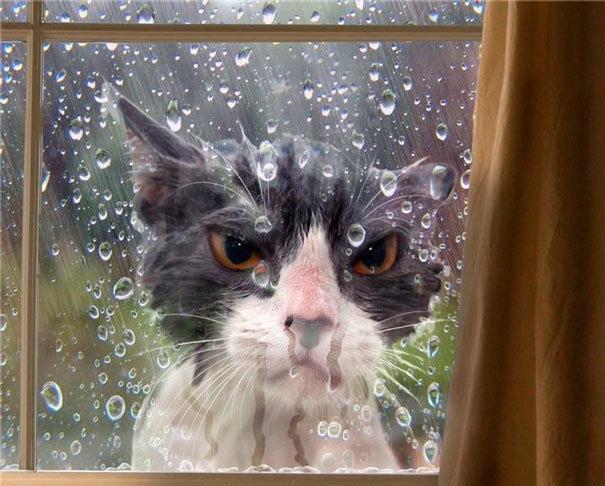 Кошки, у которых был неудачным день