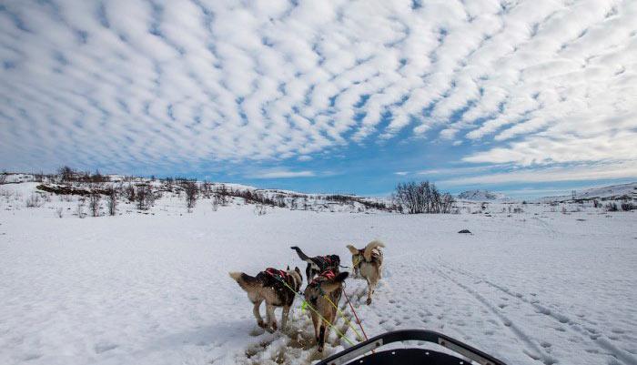 средство передвижения в тундре dog vehicle