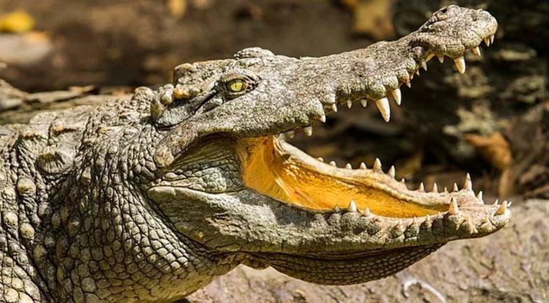 15 интересных фактов контрацепция крокодил женщины Древний Египет
