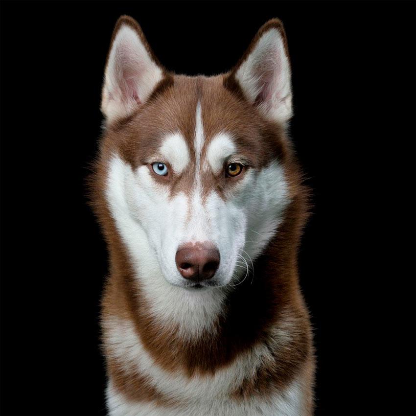 Чистосердечные портреты животных. Фотограф Роберт Бахоу