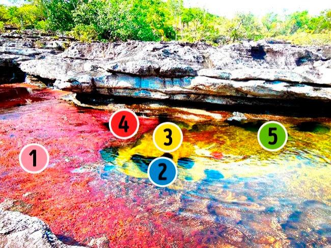 аномальные места на нашей планете Река пяти цветов, Колумбия