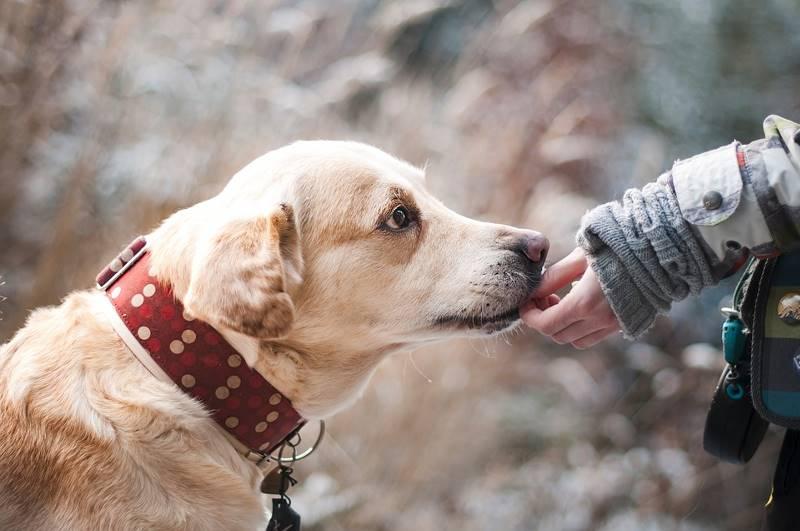 7 простых способов снять стресс Домашние животные