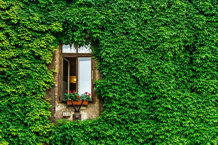 Замечательная Венгрия близость к природе