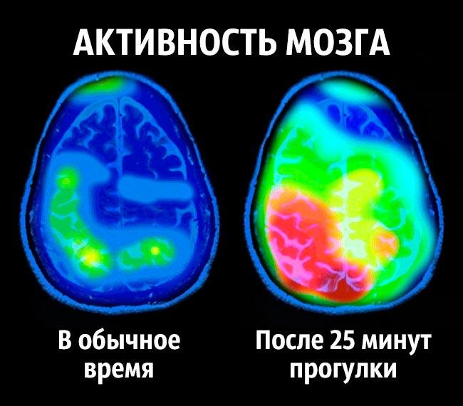 Советы нейробиолога как стать счастливым раз и навсегда