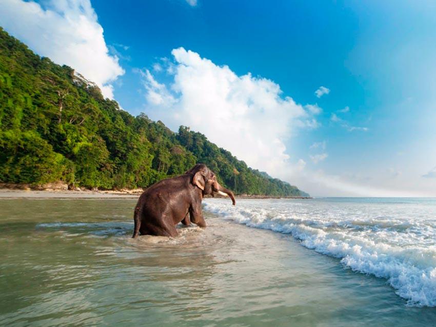 Азия: лучшие пляжи Пляж Радханагар, остров Хейвелок, Андаманские острова