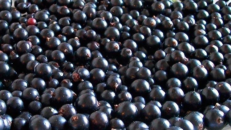 Полезные продукты для мозга Черная смородина