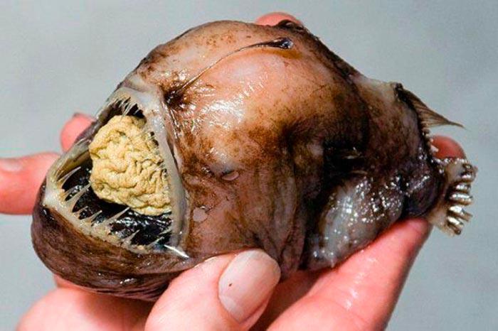 Пугающие животные из фильмов ужасов и ночных кошмаров Глубоководный морской черт