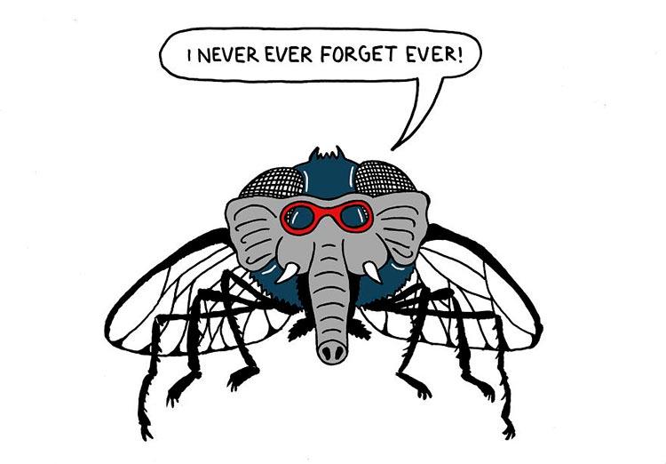 10 безумных идиом, которые говорят русские делают из мухи слона