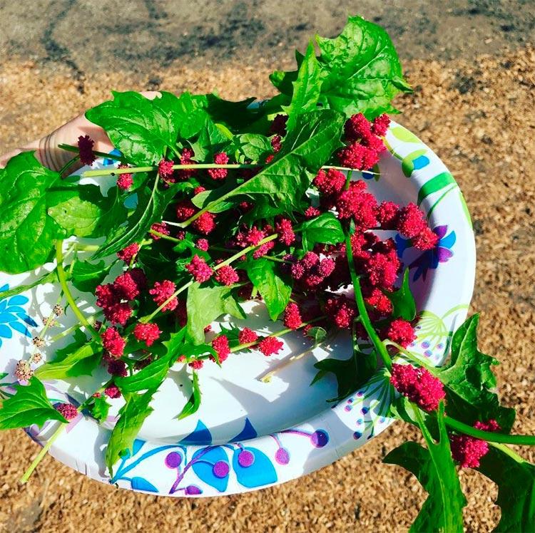Овощи, которые похожи на находки с другой планеты Земляничный шпинат