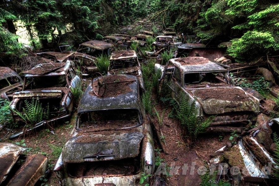 Автомобили, которые застряли в пробке в лесу