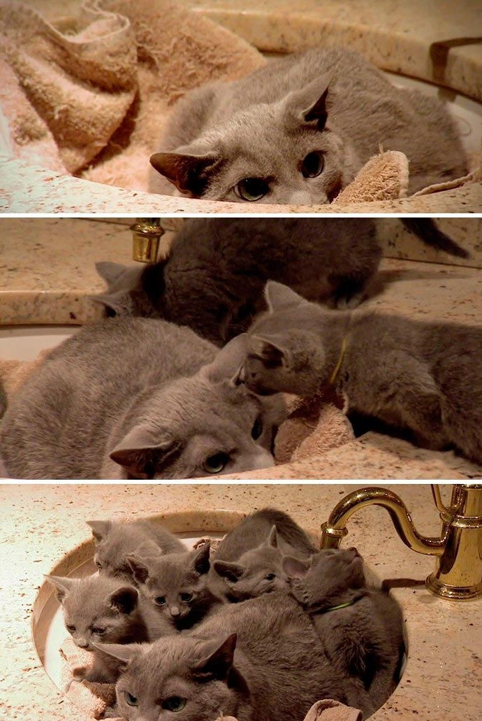 Коты, которым нравится где мало места