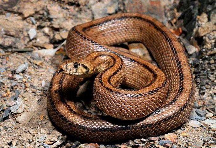 Самые опасные места на Земле Остров змей