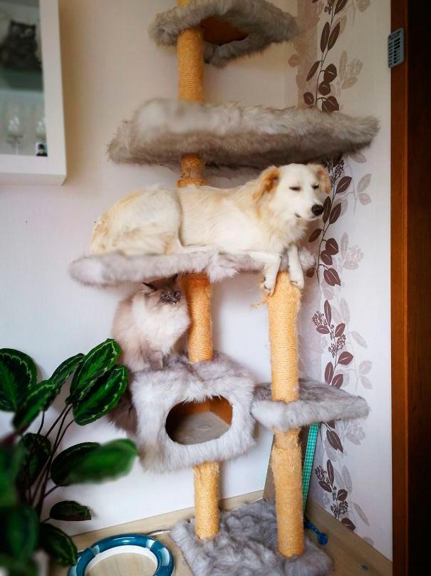 Найдены собаки, которые думают, что они коты