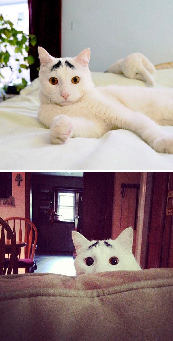 amazing coloring wool cats 1 - Коты с самой необычной раскраской шерсти