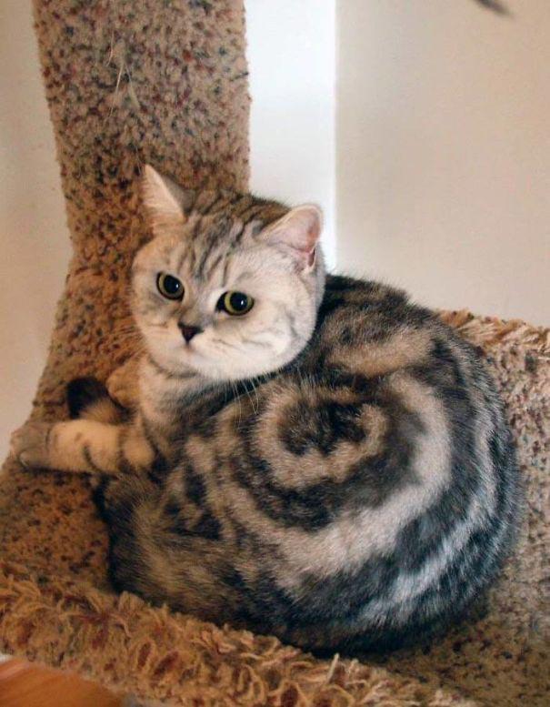 amazing coloring wool cats 13 - Коты с самой необычной раскраской шерсти