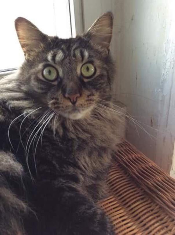 amazing coloring wool cats 3 - Коты с самой необычной раскраской шерсти