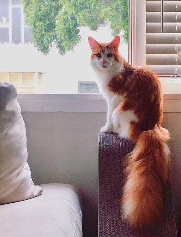 amazing coloring wool cats 4 - Коты с самой необычной раскраской шерсти