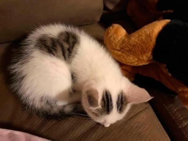 amazing coloring wool cats 5 - Коты с самой необычной раскраской шерсти