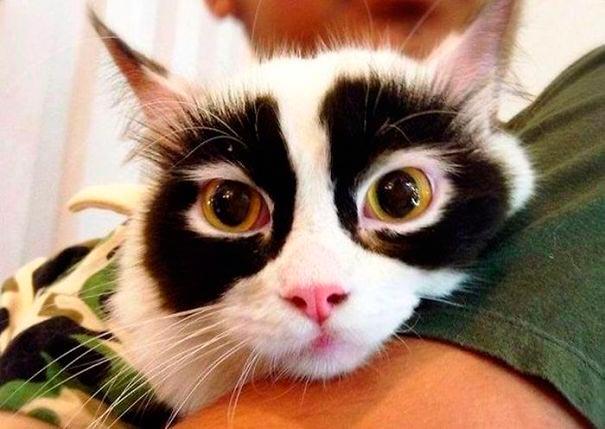 amazing coloring wool cats 9 - Коты с самой необычной раскраской шерсти