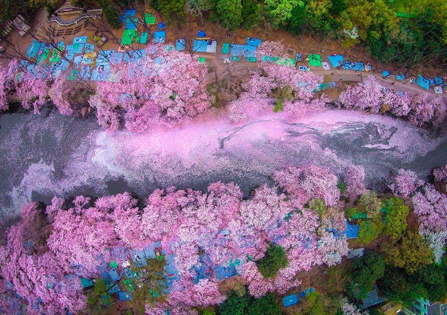Япония: самые красивые места Japan Цветущие сакуры в Токио