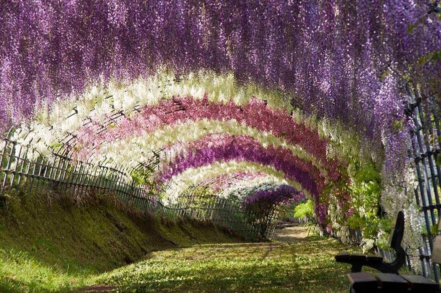 Япония: самые красивые места Japan Туннель из глициний Вистерия в саду цветов Кавати Фудзи