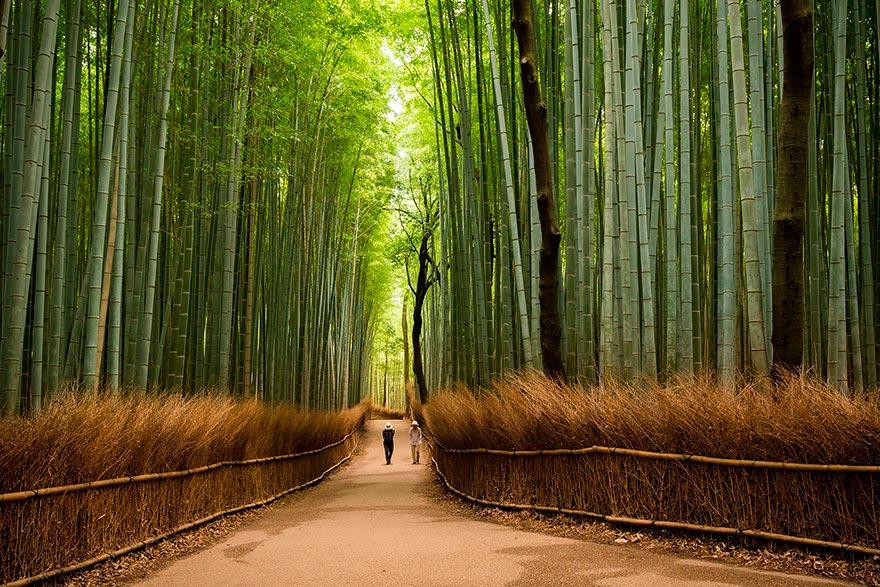 Япония: самые красивые места Japan Бамбуковая роща Сагано, парк Арасияма, Киото