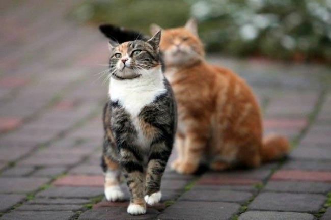 Животные, чьим эмоциям позавидуют актеры