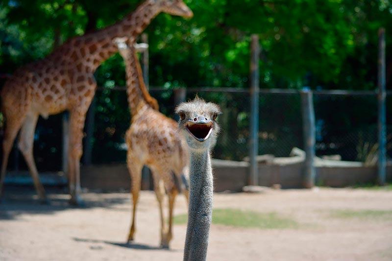 Восхитительные животные, которые влезли в кадр