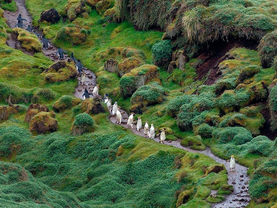 Восхитительная красота Австралии Острова Маккуори, южная часть Тихого океана