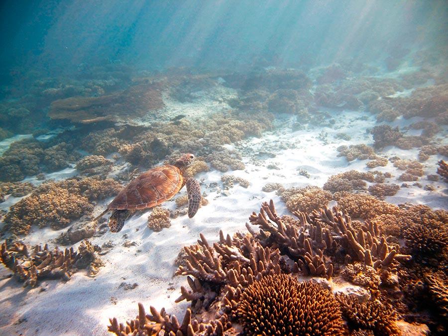 Восхитительная красота Австралии Риф Нингалу, Западная Австралия