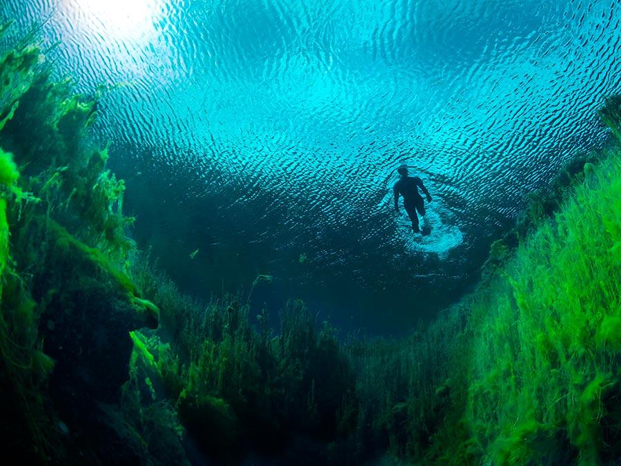 Восхитительная красота Австралии Пруды в Национальном парке Piccaninnie Ponds