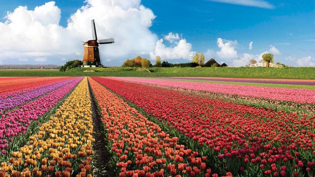 Нидерланды: удивительные факты Лисс парк цветов Кекенхоф