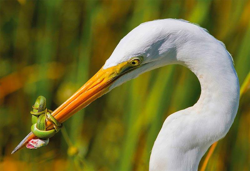 Bird Photographer of the Year 2017: лучшие фотографии птиц Битва. Хосе Гарсия, США